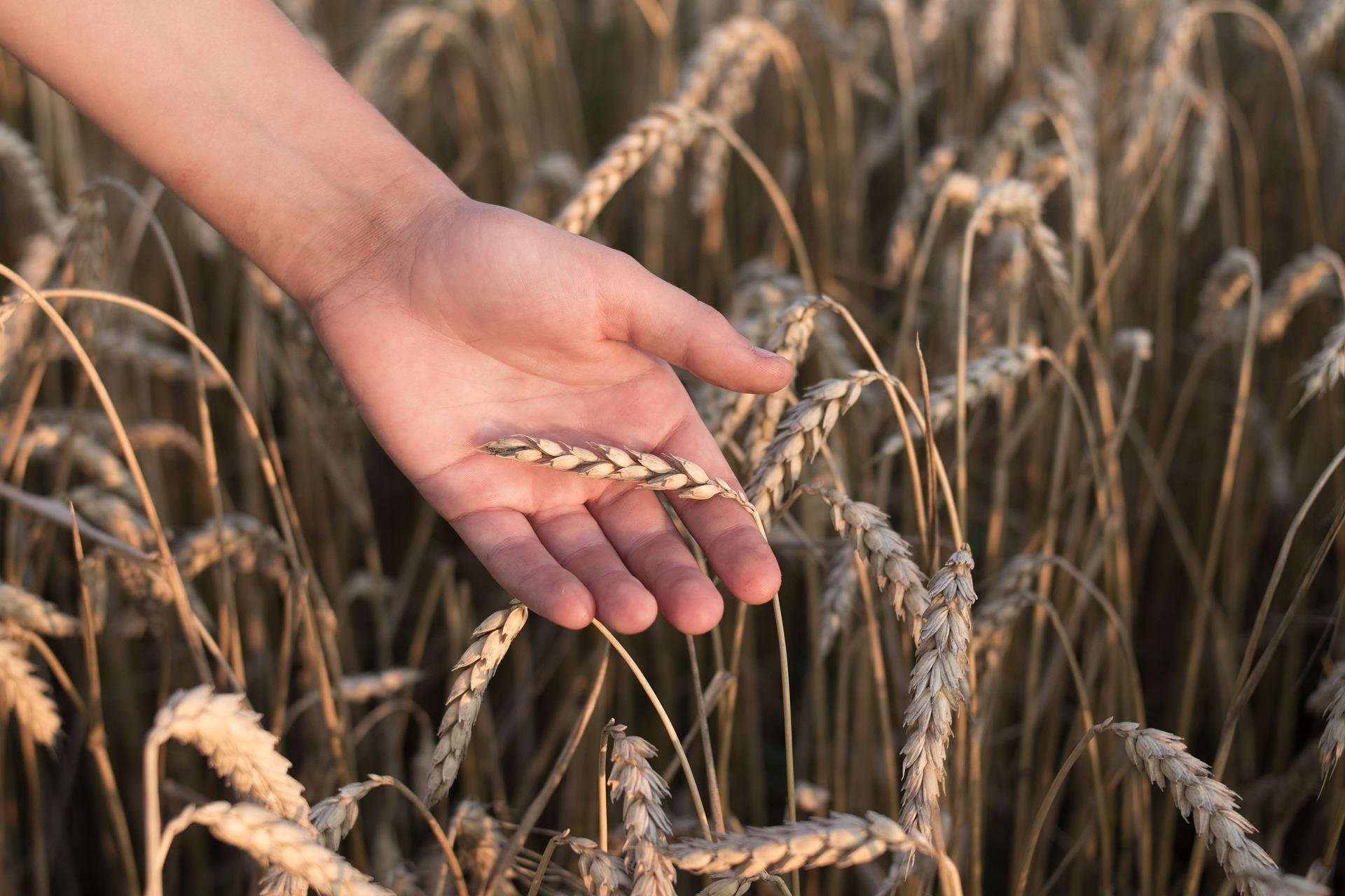 Nos champs communs : Collecte intergénérationnelle de mémoires paysannes
